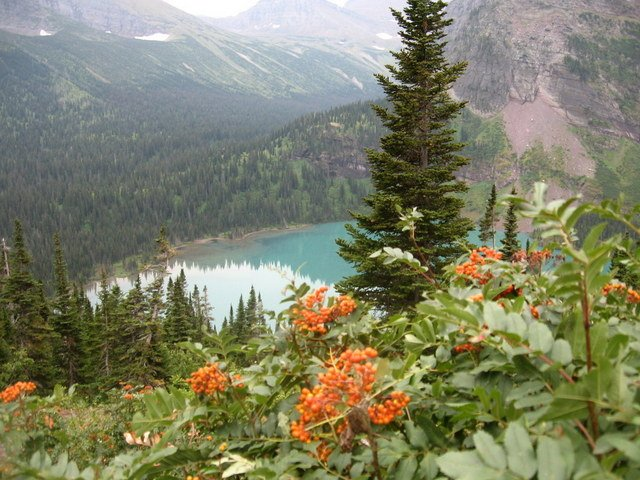 Wild flowers above Grinnell Lake