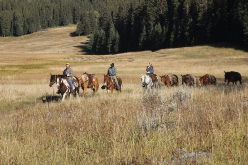 Mule train on the Slough Creek Trail