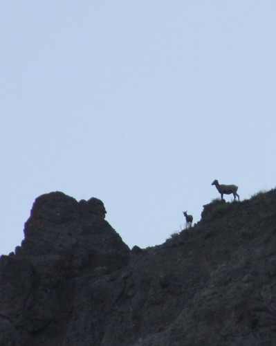 Across the canyon: the ewe and her lamb